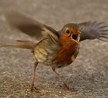 Really, REALLY, mad Robin by kintired
