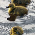 3 Little Ducks by OurKev