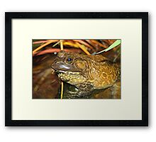 American Bullfrog Closeup and Personal Framed Print