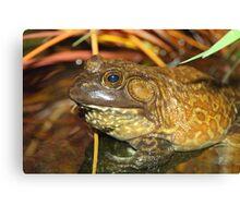 American Bullfrog Closeup and Personal Canvas Print
