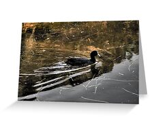 Coot. Greeting Card