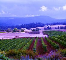 Oregon Vineyard by maggiebarra