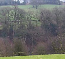 Trees in English Winter by bmosborn