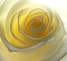 Pale Yellow Rose by Gisele Bedard