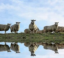 Flock Reflections by grezmel