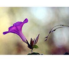 Flowering Vines Photographic Print