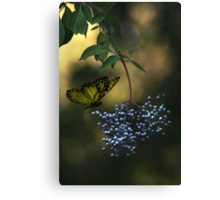 Natures little secret Canvas Print