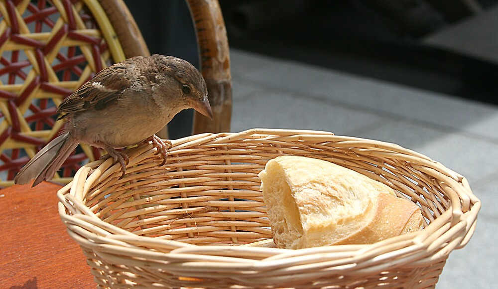 Bread Thief by Stormswept