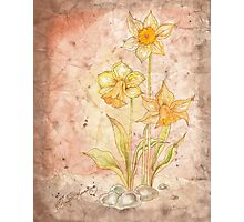 The Grunge Daffodils Photographic Print