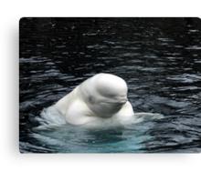 Beluga: Arctic Whale Canvas Print