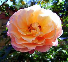 """""""Sheer Beauty,"""" (2) by John  Smith"""