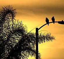 Morning Light, A Bird's Delight by CarolM