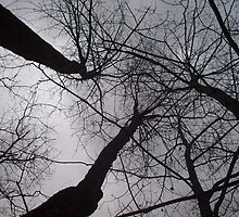 Evening Sky by ripinamberlost