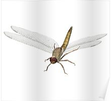 Dragonfly Cartoon Character Poster