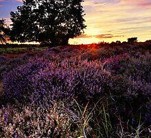 Dunwich Heath 8. by Wayne Bradshaw