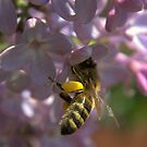 Bee in work by zolim