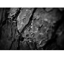 Champion Loblolly Pine Bark – Congaree National Park, South Carolina Photographic Print