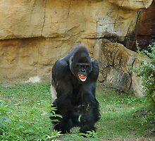 Gorilla curls his lip by memphisto
