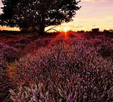 Dunwich Heath 6. by Wayne Bradshaw