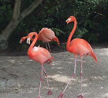 Pinky Pink Flamingos  by KoKoArt