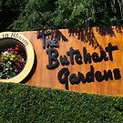 Butchart Gardens by Debra LINKEVICS