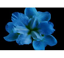 Blue Caress Photographic Print
