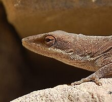 Native lizard by mwfoster