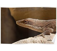 Native lizard Poster