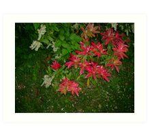 Wierd Flowers Art Print