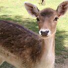 Deer by evapod