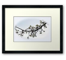 Blooming Branch In A Rain Framed Print