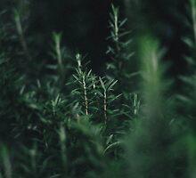 Rosemary by strangerandfict