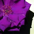Purple flower by evapod