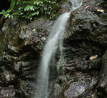 Waterfall - Dorrigo National Park by Peter South