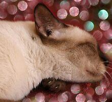 Sweet Christmas Dreams by Freelancer