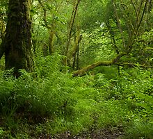 The Wild Wood by DonDavisUK