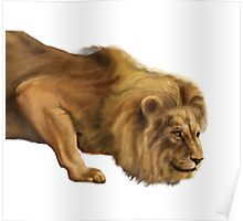 African Lion Image Poster