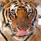 Tiger tongue by evapod