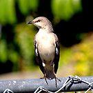 Bird on a fence.... by Larry Llewellyn