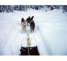 Dog Sledding Photographic Print