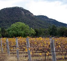 Hunter Valley Wines by Cheryl Parkes