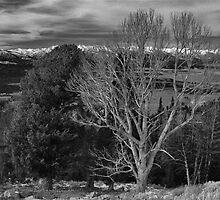 Winter Winds Cometh by J. D. Adsit