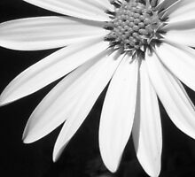 Beauty in Black and white by karenkirkham