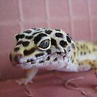 Gecko Eyes by Agood