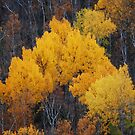 More Yellow by zachdier