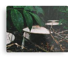 Forest Floor. Metal Print