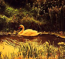 Swan at the Golden Lake  by JennyRainbow