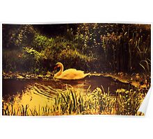 Swan at the Golden Lake  Poster