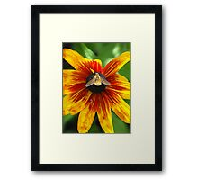 Glow Little Bumble Bee! Framed Print
