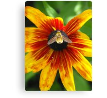 Glow Little Bumble Bee! Canvas Print